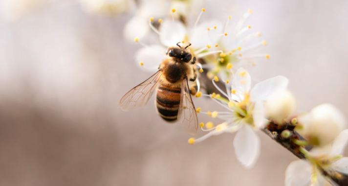 Hogyan készül a méhek otthona
